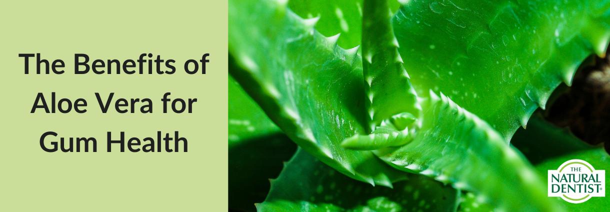 Aloe Vera and Gum Health Benefits